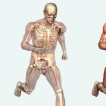 Learn Through Pictures : Human Body