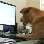 Idiom : To work like a dog
